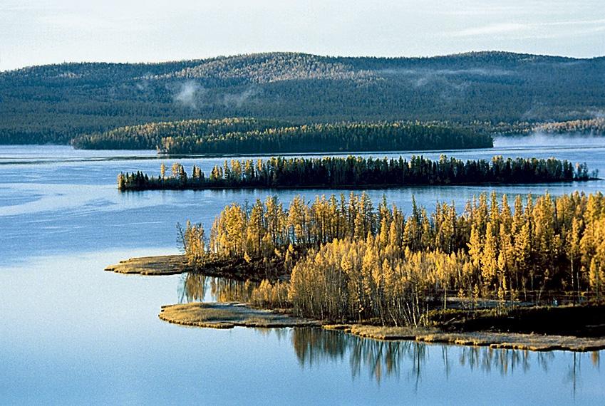тоджинская котловина фото лес природа большей